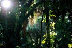 Schattiger sonnenbeschiener subtropischer Waldmorgen Stockfotos