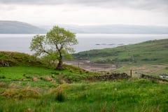 Schauen über Ackerland zum Loch Fyne Stockfotografie