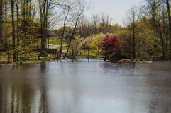 Schauen über dem Teich Stockbild
