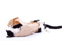 Schauen der schwarzen Katze Lizenzfreie Stockfotos