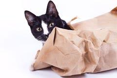 Schauen der schwarzen Katze Stockbild