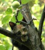Schauen des skewbald Kätzchens Stockfotos