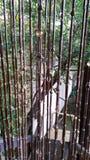 Schauen durch Bambusvorhange Lizenzfreies Stockbild