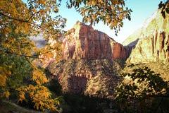 Schauen durch die Bäume in Nationalpark Zion Stockbilder