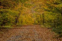 Schauen hinunter schmalen Weg im Herbst Stockfotografie