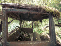 Schauen in Rusty Moss Covered Truck Window Abandoned im Wald Stockbild