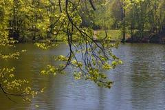 Schauen Sie durch Niederlassungen auf einem Teich Stockbild