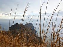 Schauen Sie ein Kap durch ein Gras stockfoto