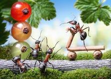 Schauen Sie heraus, das Fahrrad, das Bremse, Ameisengeschichten löst Stockfotos