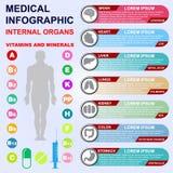 Schauen Sie inneren menschlichen Körper Vitamine und Mineralien Lizenzfreies Stockfoto