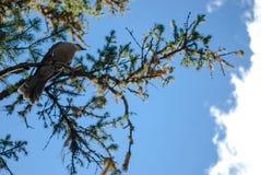 Schauen Sie oben unter einem Vogel, der in einem Baum gehockt wird Lizenzfreie Stockbilder