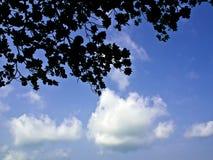 Schauen Sie oben zum Himmel unter dem Baum Stockfotos