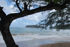 Schauen Sie um den Baum und gerade nach dem Ozean Lizenzfreie Stockbilder