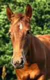 Schauen Sie vom Pferd Lizenzfreies Stockfoto