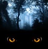 Schauen Sie von der Dunkelheit Stockfoto