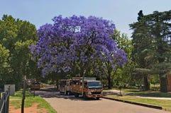 Schauen Sie von Johannesburg-Zoo, Südafrika stockbilder