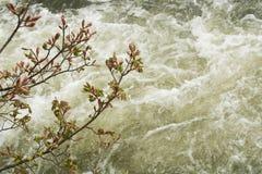 Schauen unten auf Wasser drei Stockfoto