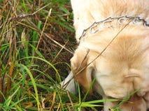 Schauen von Hund 2 Stockbild