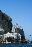 Schaukeln Sie vertikal haften aus dem Wasser und den Vögeln heraus Stockbild