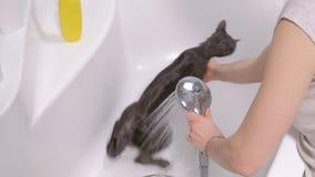 Schaumbad eine kleine Grauumherirrenderkatze, Frau wäscht die Katze im Badezimmer stock video footage