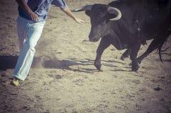 Schauspiel des Stierkampfes, wo ein Stier Fighting ein Stierkämpfer S Stockfoto