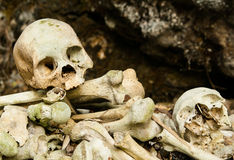 Schädel und Knochen Lizenzfreies Stockfoto