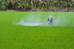 Schädlingsbekämpfungsmittel auf Reisfeld Stockbilder