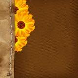Scheda con i fiori ed il bordo per il disegno Immagini Stock