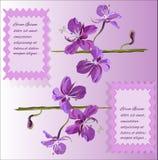 Scheda con i fiori viola Fotografia Stock