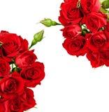 Scheda con le rose Fotografia Stock Libera da Diritti