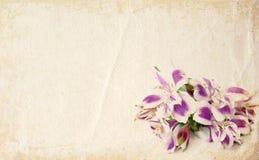 Scheda del fiore Fotografie Stock Libere da Diritti