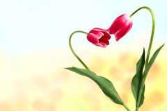 Scheda del fiore della sorgente Fotografia Stock