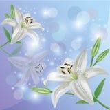 Scheda del fiore, di saluto o dell'invito del giglio Immagini Stock