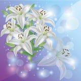 Scheda del fiore, di saluto o dell'invito del giglio bianco Fotografia Stock