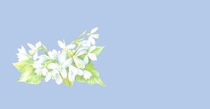 Scheda del fiore di Snowdrops Immagini Stock Libere da Diritti