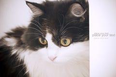 Scheda del gatto Fotografie Stock