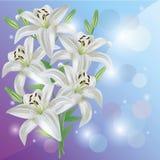 Scheda dell'invito o di saluto con il fiore del giglio Fotografie Stock