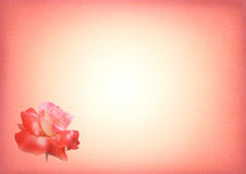 Scheda dentellare della stampa della Rosa Fotografie Stock