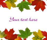 Scheda di autunno Immagine Stock