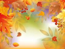 Scheda di autunno con i fogli di acero Immagini Stock Libere da Diritti