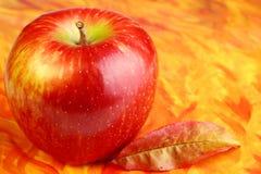 Scheda di autunno con la mela rossa Fotografia Stock