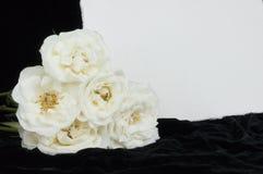 Scheda di compassione e rose bianche con lo spazio della copia. Fotografie Stock