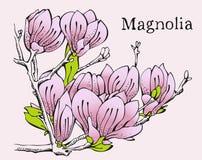 Scheda di disegno di colore rosa della magnolia royalty illustrazione gratis