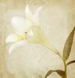 Scheda di festa del fiore di bellezza dell'annata su vecchio documento Fotografie Stock