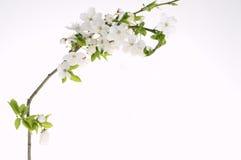 Scheda di festa di saluto con i fiori di fioritura Immagini Stock Libere da Diritti