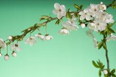 Scheda di festa di saluto con i fiori di fioritura fotografia stock libera da diritti