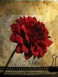 Scheda di Grunge con il fiore no.1 Fotografia Stock