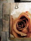 Scheda di Grunge con no.5 di rosa Fotografia Stock