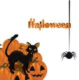 Scheda di Halloween con il gattino e la zucca Immagine Stock
