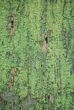 Scheda di legno incrinata anziana con vernice verde Fotografia Stock